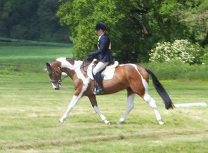 William Dressage Borde Hill May 2014
